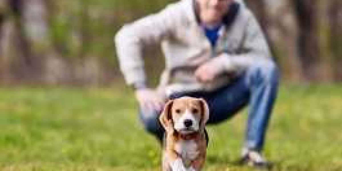 Specific Facts Associated With Pet Friendly Rehabs Near Me